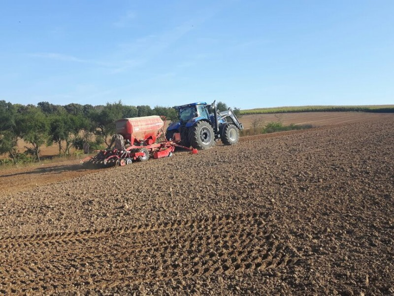 Weizen-Aussaat mit Mulchsaatmaschine